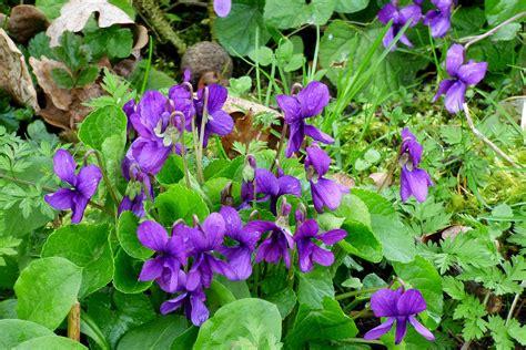 violet blue color violet color