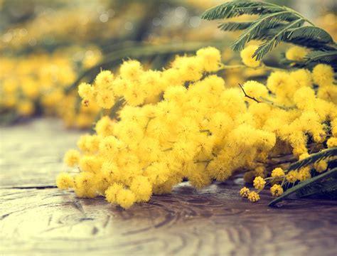 invia fiori invia fiori fresca consegna fiori spedisci fiori gratis