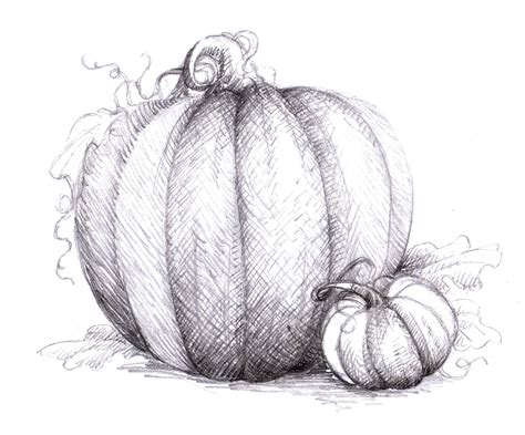 magellin pumpkin drawing - Pumpkin Sketches
