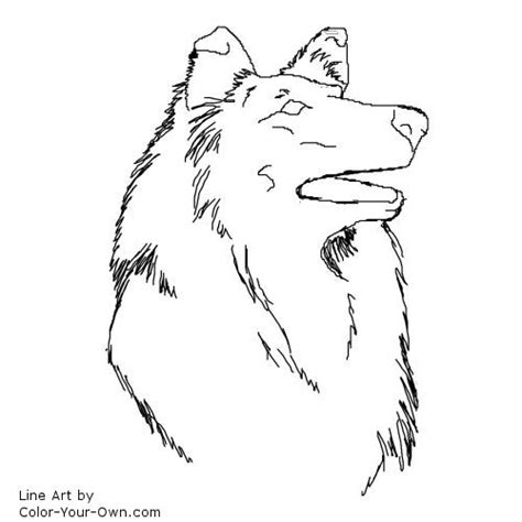 Border Collie Coloring Pages Coloring Pages Border Collie Coloring Pages