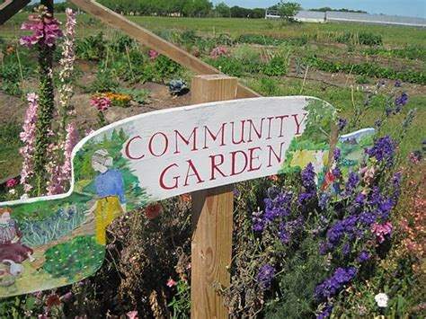 community garden rebuild  african alliance