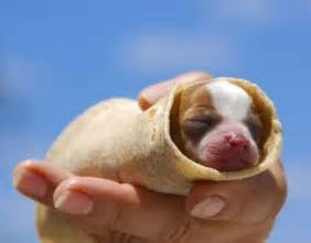 puppy pictures these 8 pictures of puppies can help you focus melt your