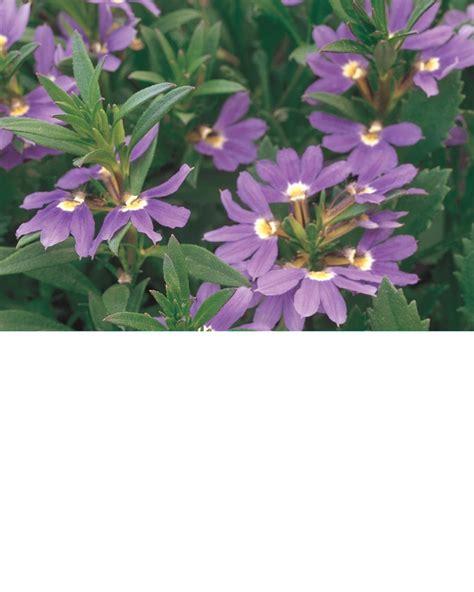 heat tolerant crops 17 best images about heat tolerant plants on pinterest