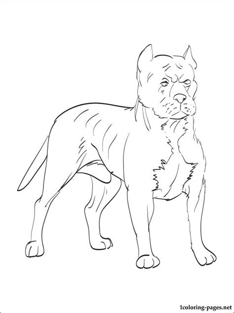coloring pages pitbull puppies blue nose pitbull coloring pages coloring pages