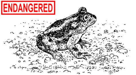 ct boating license age deep eastern spadefoot toad fact sheet