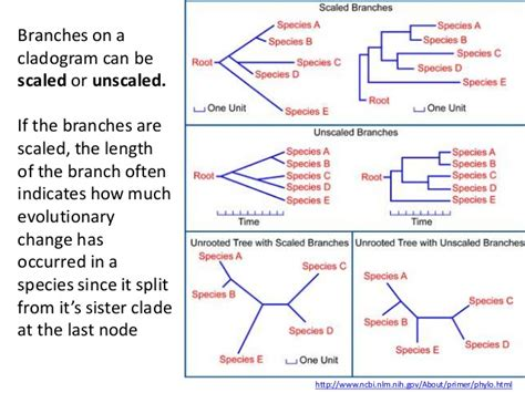 cladogram venn diagram ib biology option d 5 phylogeny and systematics