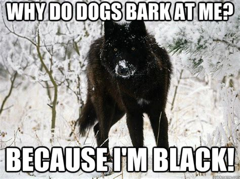 why does my puppy bark at me why do dogs bark at me because i m black melanistic black paranoia wolf quickmeme