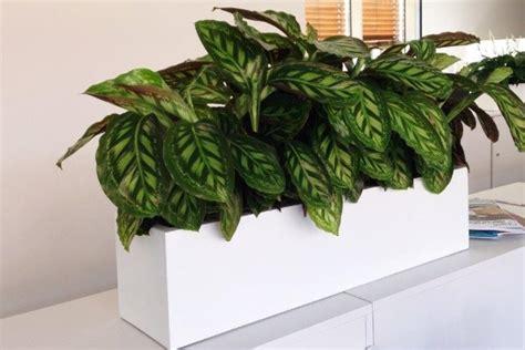 acheter des plantes de bureau chez anygreen
