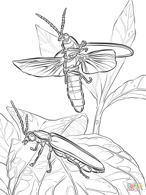 common eastern fireflies coloring page free printable