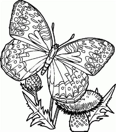 butterflies free printable coloring pages az coloring