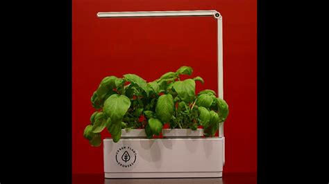 urban plant growers basil growth  indoor smart garden