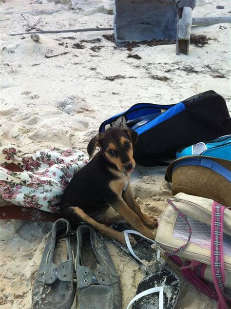 puppy island turks and caicos turks and caicos the and dogs on