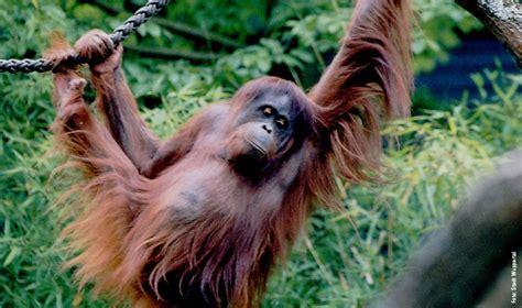 Zoologischer Garten Wuppertal öffnungszeiten by Wuppertaler Zoo Die Bergischen Drei Tourismusregion
