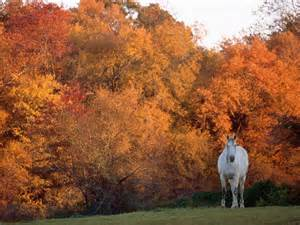 Christmas Barn Pictures Autumn Horse Pictures Wallpaper Wallpapersafari