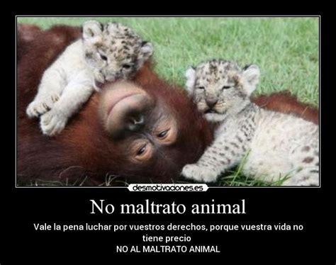 no maltrato animal no maltrato animal desmotivaciones