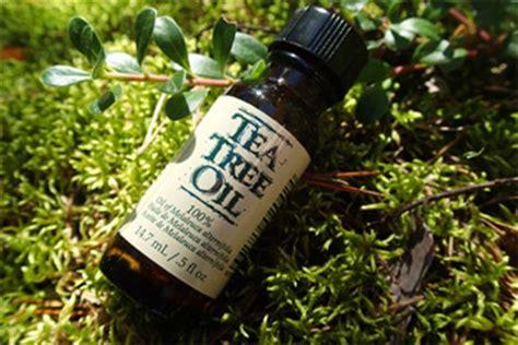 does tea tree oil kill lice head lice treatment how to treat head lice best