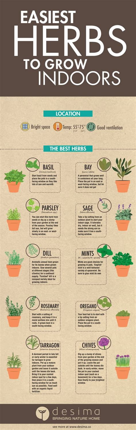 Easy Herbs To Grow Inside | diy mason jar herb garden and herb ideas the whoot