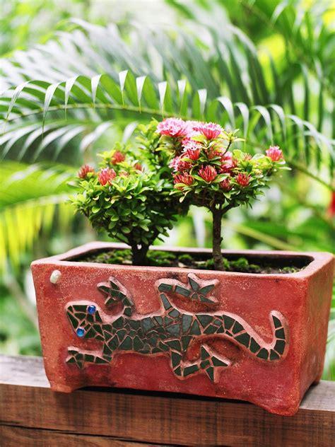 decorate  miniature roses hgtv