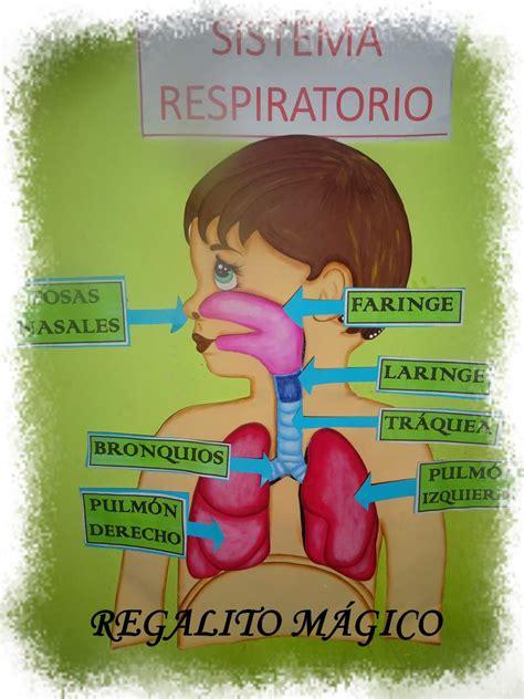maqueta aparato respiratorio con dibujos regalito m 225 gico sistema respiratorio