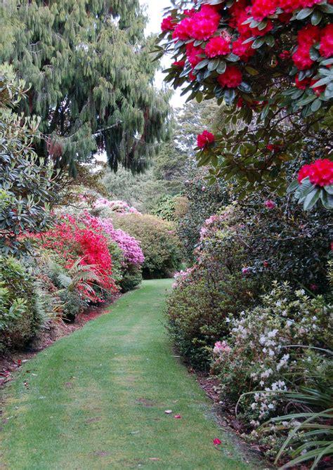 rhododendron garten pukeiti rhododendron garden