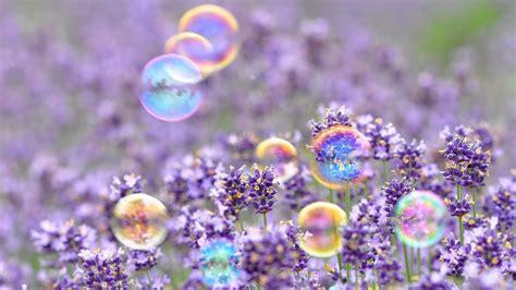 fiori hd sfondi hd desktop fiori 86 immagini