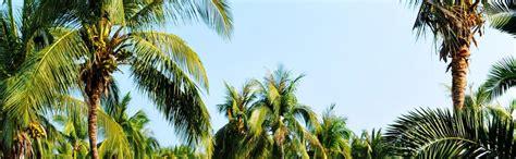 lighted palm tree amazon amazon com lightshare lighted palm tree large garden