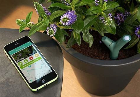 parrot flower power app controlled plant monitor gadgetsin