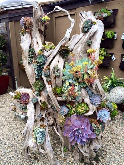 succulent planter diy for under 10 weed em reap driftwood succulent display succulents pinterest