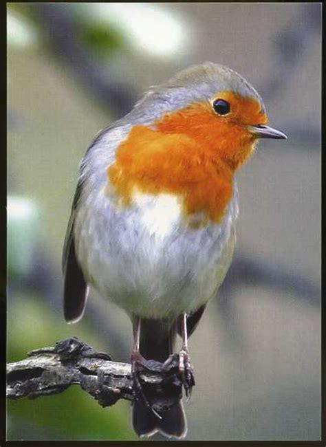 playle s little bird with orange breast on tree
