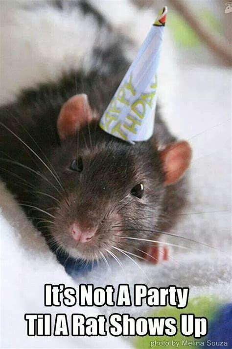 Rodent Meme - 336 best images about 50 shades of cute on pinterest