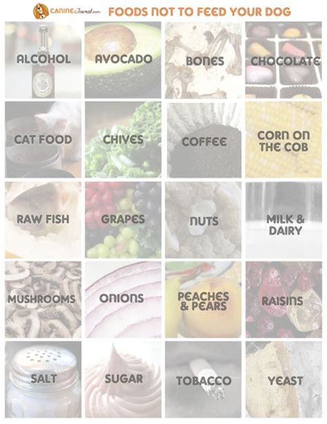 foods not to feed dogs what foods are toxic for dogs caninejournal