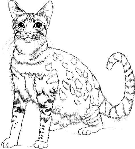 zombie cat coloring page im 225 genes de gatitos para colorear 6 ideas y material