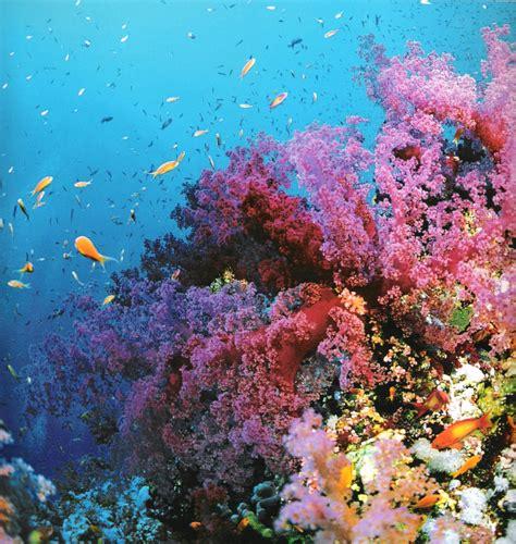 la grande barri 232 re de corail de cairns avec quicksilver