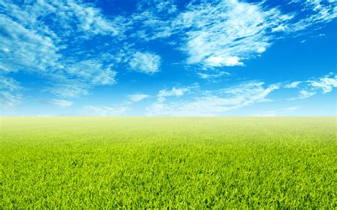 Wallpaper Green Field | green field wallpaper 397074