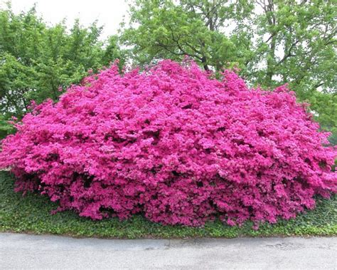 popular landscaping groundcovers and shrubs groundcovers that give lift to your landscape
