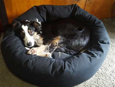 mammoth dog beds dog beds made in america fitting guide lifetime guarantee