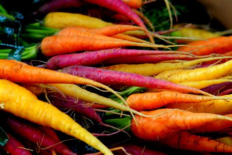 colorful carrots colorful carrot seeds