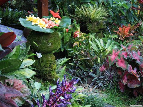 plants for backyard tropical garden image gallery dennis hundscheidt