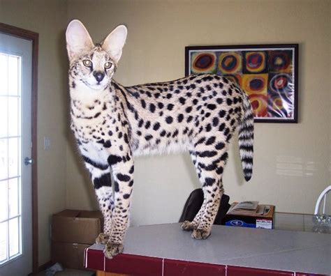 exotic pets    legally    places