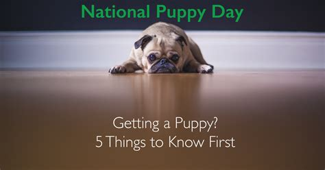 things to when getting a puppy ttpm blogs 5 things to when getting a puppy ttpm blogs