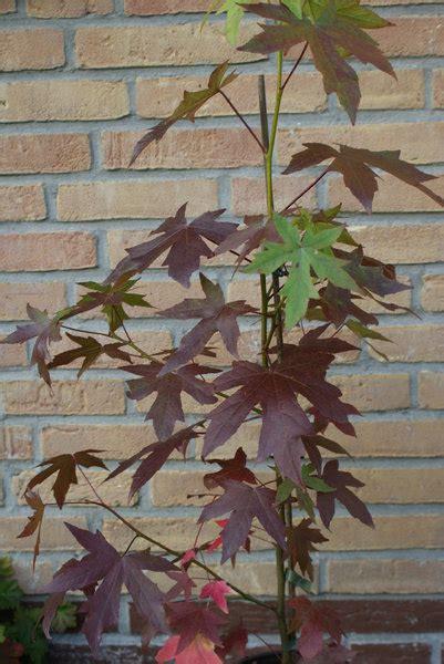 Immergr Ne Pflanzen F R Sonnige Standorte 224 by Amberbaum Worplesdon