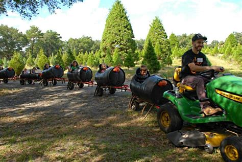 christmas tree farm miltin fl tree farms in florida
