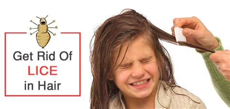 how to get rid of lice in house get rid of hair in house 28 images how to get rid of frizzy hair at home
