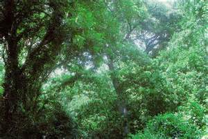 Forest Tx Tpwd Gis Vegetation Types Of Forest