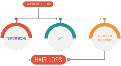 dht and hair loss 5ar inhibitor seehow finasteride dosage uses side effects for hair loss