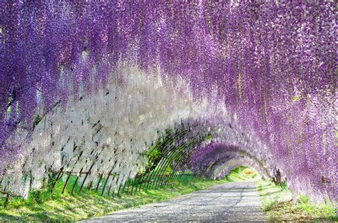 ashikaga flower park 21 beautiful colorful landscapes bursting with springtime
