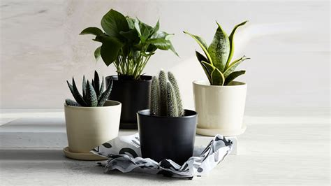 Where To Buy Plant Pots Where To Buy Planters And Flower Pots For Outdoor And