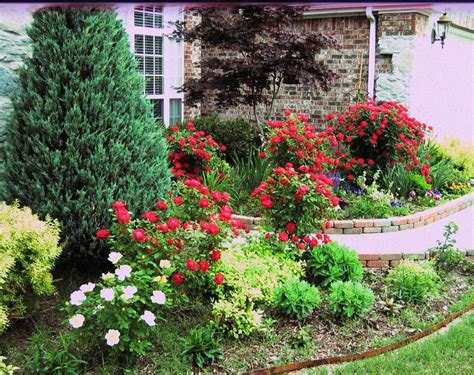 Landscape Pictures With Knockout Roses Perhaps Around Wichita Blue Juniper Flower Carpet