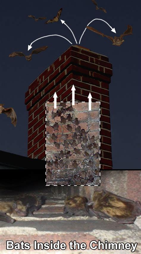 Bats In Fireplace Chimney bats in the chimney how to get bats out of the chimney