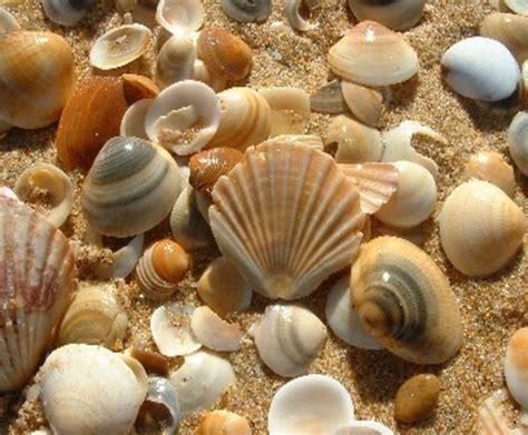 all about beautiful bali bali shells